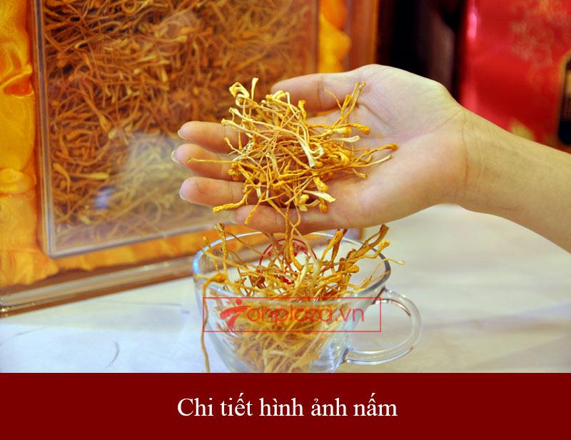 Nấm đông trùng hạ thảo Việt Nam sấy khô 100gr/hộp D205 4