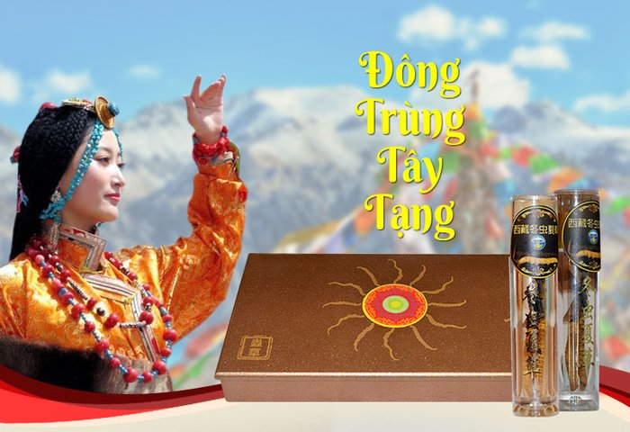 DTHT Tây Tạng nguyên con cao cấp 10g/hộp D008 1