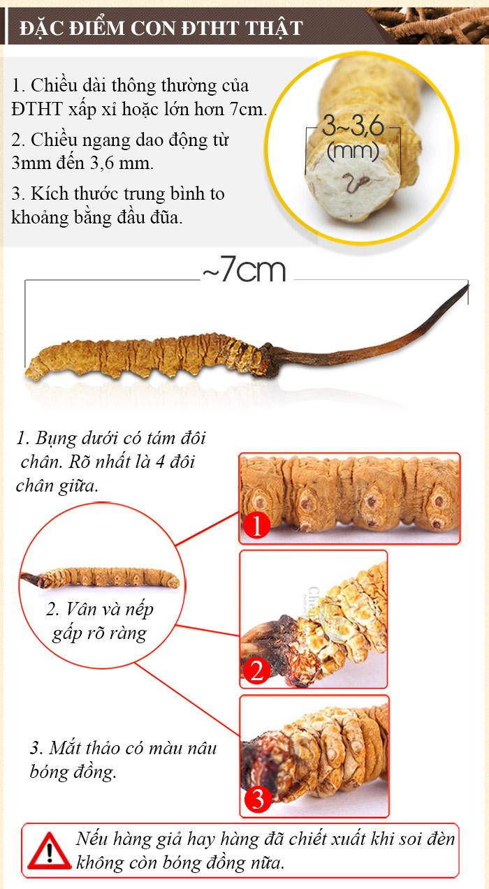 Một số cách nhận biết đông trùng hạ thảo Tây Tạng hàng thật và giả 1